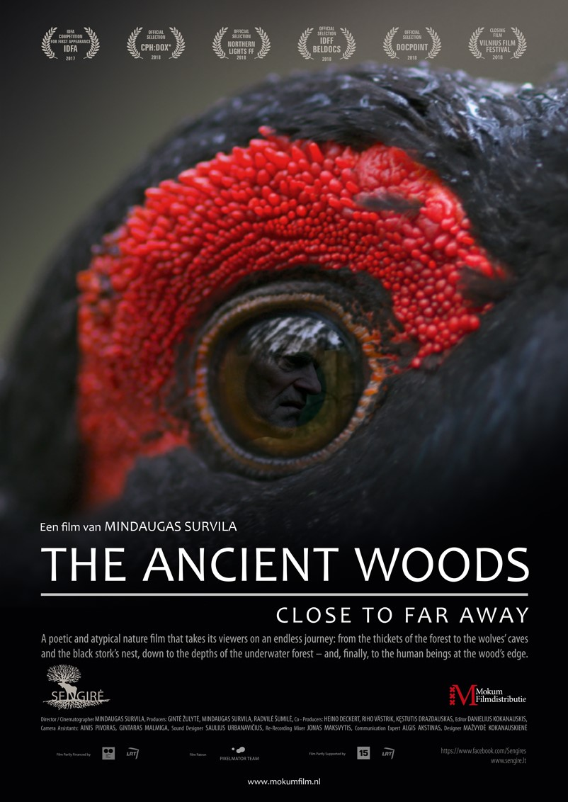 The Ancient Woods